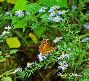 Butterfly_edited-1